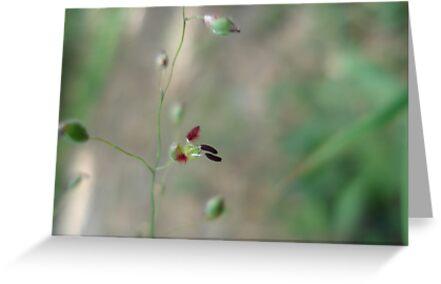Love Grass Flower (Eragrostis) by May Lattanzio