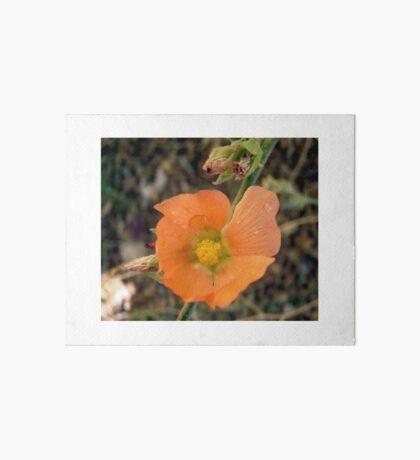 Orange flower Art Board