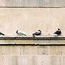 Pidgeon Street by Gillen
