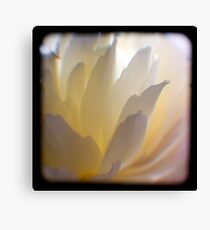 white petals ttv Canvas Print