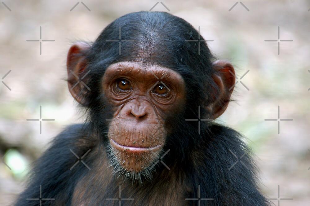 Little Chimp by ApeArt