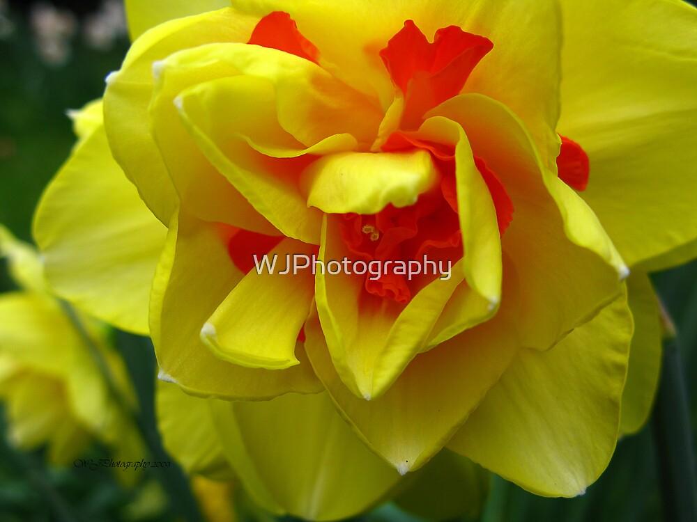 Lemon Fire~ by WJPhotography