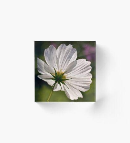Glühender weißer Kosmos Acrylblock