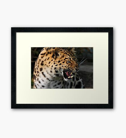 Angry Leopard Framed Print