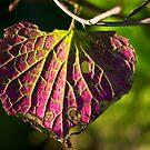 Purple Fan by Christopher Bookholt