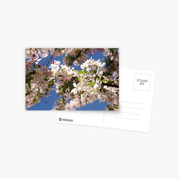 Fresh spring Postcard
