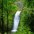 Lower Multnomah Falls, Oregon by Kay Martin