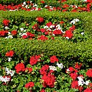 Sunny Garden by dmark3