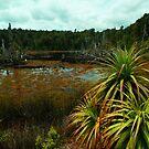 Tin dam in the Tarkine by Nic Haygarth