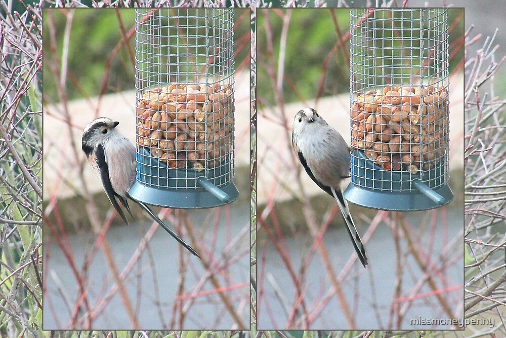 Long Tailed Tit Collage by missmoneypenny