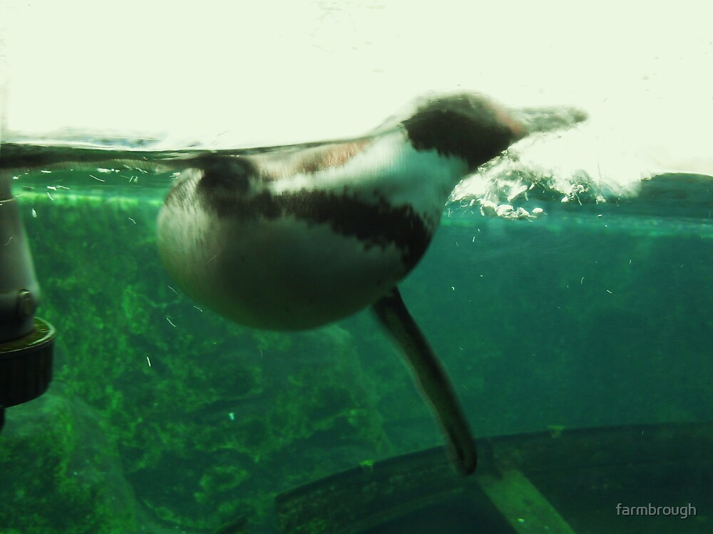 Penguin Swimming by farmbrough