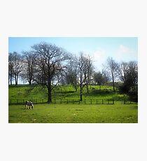 Rural Somerset Photographic Print