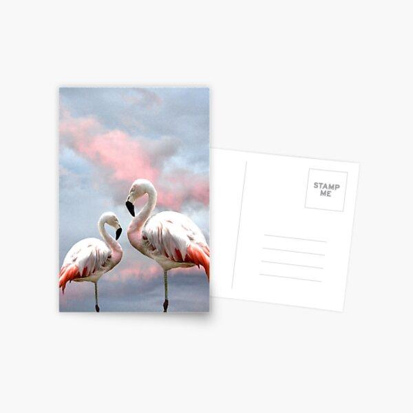 Flamingo Sky sunset birds Postcard