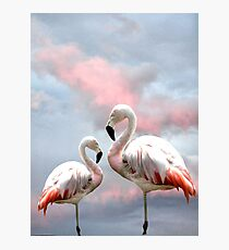 Flamingo Sky sunset birds Photographic Print