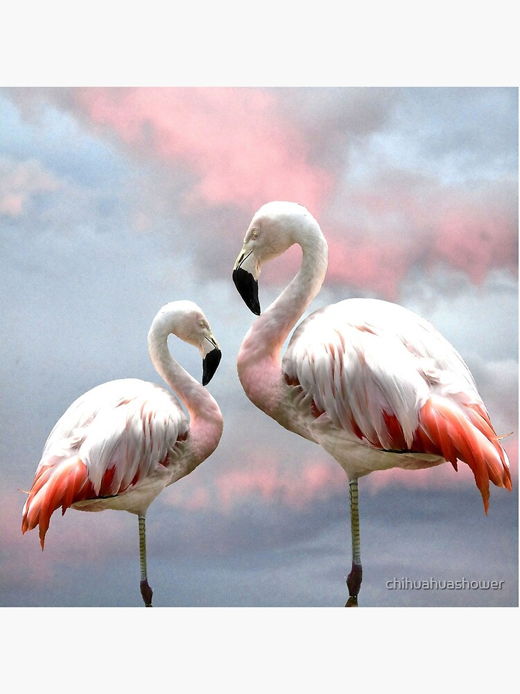 Flamingo Sky sunset birds by chihuahuashower