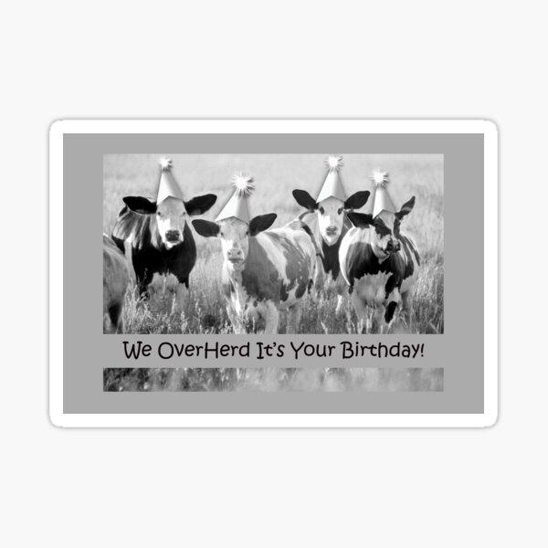 Birthday Cows, We Overherd Sticker