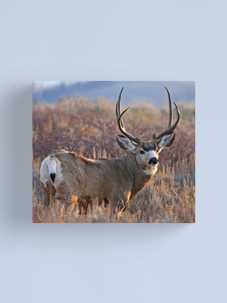 Alternate view of Buck, Afternoon Light in Late Fall Canvas Print