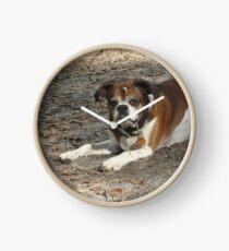 Meet Popeye - my new old dog Clock