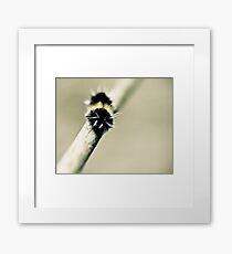 Moth Framed Print