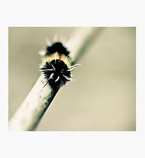 Moth Photographic Print