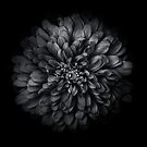 Backyard Flowers In Black And White 68 by Brian Carson