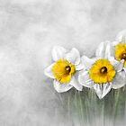 Daffodils by Renee Dawson