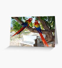 Macaws Greeting Card