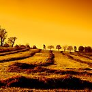 Golden Fields by believer9