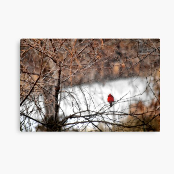 Red Bird in the Snow Canvas Print
