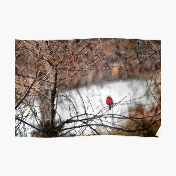 Red Bird in the Snow Poster