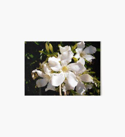White oleanders Art Board