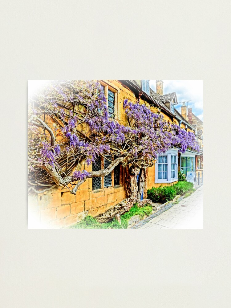 Alternate view of Wisteria Cottage. Photographic Print