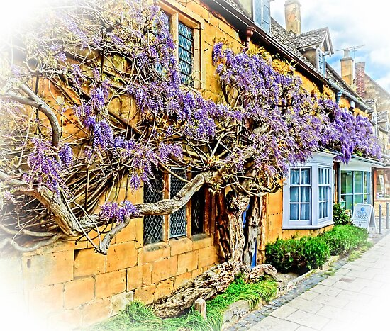 Wisteria Cottage. by ScenicViewPics
