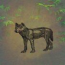 Dingo by David Dehner