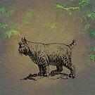Bobcat by David Dehner