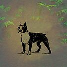 Boston Terrier by David Dehner