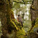 Early Bird by Jennifer Vickers
