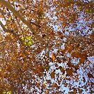 Bright Fall Foliage by caseykayb
