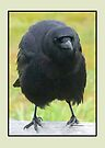My Crow Friend by Betsy  Seeton