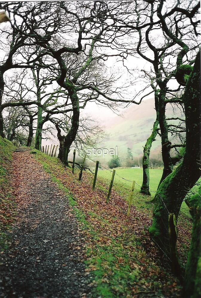 Welsh Oak by stopal