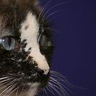 kitty - kat by Susanne Correa