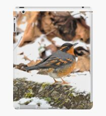 Handsome Male Varied Thrush Amid Snow and Seed iPad Case/Skin