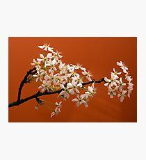 Spring bloom -2 Photographic Print