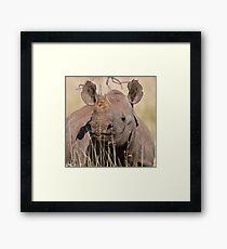Black Rhino at Lewa Framed Print