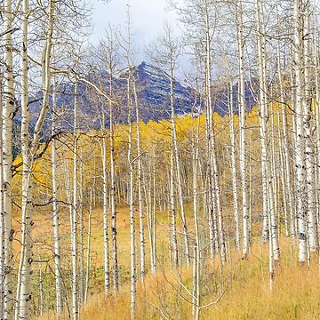 Aspen Ambience by glasere