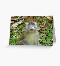 Monkey Business In Indonesia Greeting Card