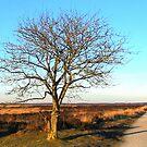Winter Country Road Fochteloerveen by ienemien
