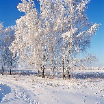 Winter's Tale by zadiraka
