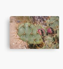 Opuntia prickly pear cactus with thorns and fruits, prickly close up Metal Print