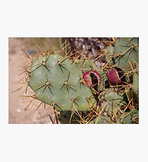 Opuntia prickly pear cactus with thorns and fruits, prickly close up Photographic Print
